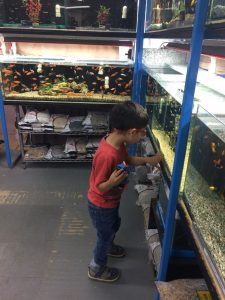 child looking at fish #petstore #oceanlife #homeschool #homeschoolkindergarten  #homeschoolpreschool #5SLL #5sensesLL #neurodiversehomeschooling #adhdhomeschooling
